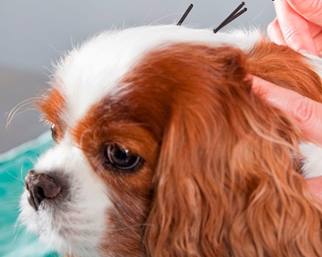 Can Acpuncture Help A Dog With Back Pain