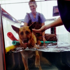 Hydrotherapy helps soothe this puppy's arthritic joints. He loves the warm water!
