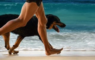 Ideas For Fun Exercise With Your Dog