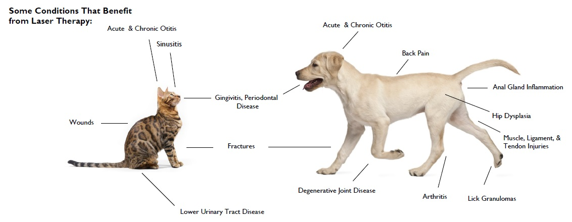 This laser therapy diagram demonstrates just a few of the conditions laser therapy can treat for both cats and dogs!