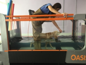 Hydrotherapy helps soothe Duke's arthritic joints. He loves the warm water!