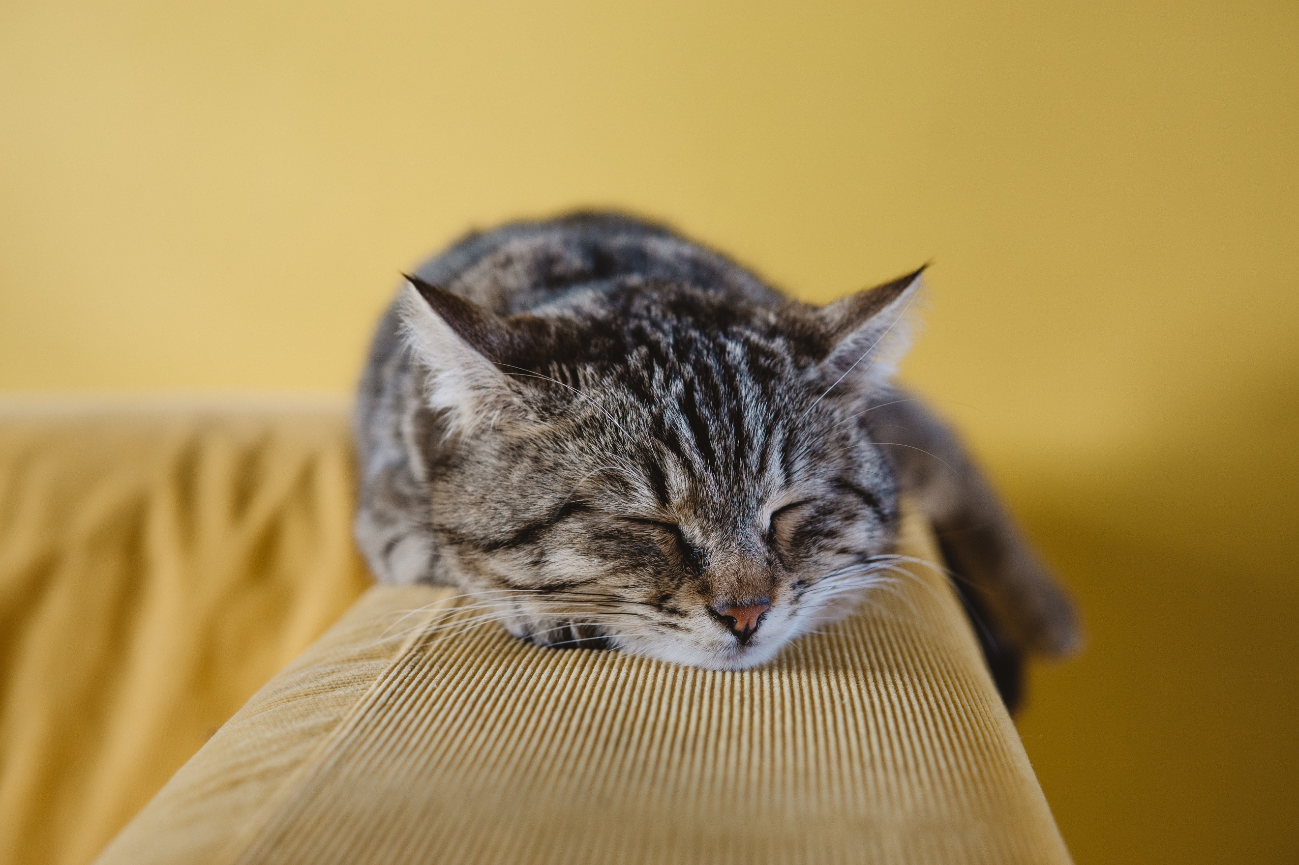 Did you know even cats can display signs of arthritic pain?