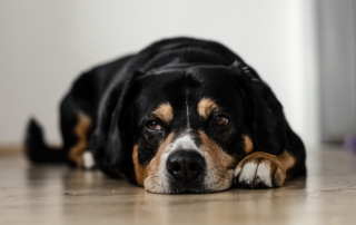 Do you know the signs of arthritis in your pet?