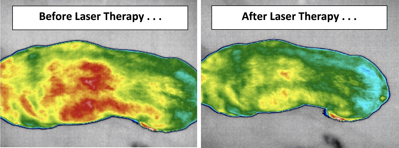 Infrared imaging can guide pet pain relief