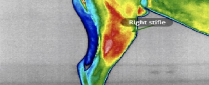 Our infrared imaging allows us to see the degree of inflammation and pain and treat accordingly! Using this modality, we are able to ensure GREAT pain management, and treat any compensatory areas!