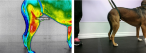 Thermal imaging allows us to isolate and determine WHERE the pain is!