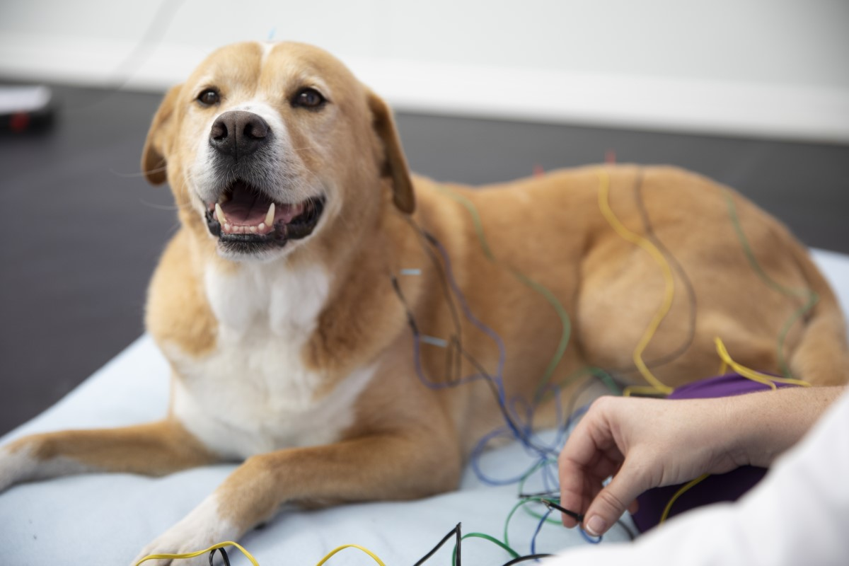Acupuncture can increase your pet's energy so they can go farther on those daily walks or even hop into the car like they used to when they were younger.