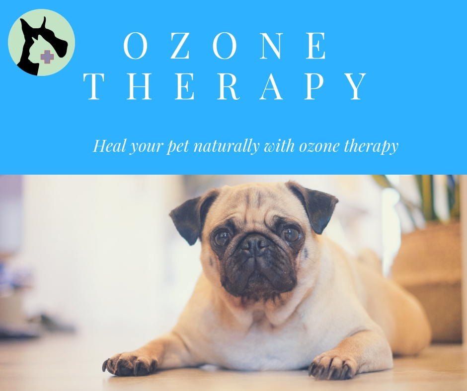 Chronic condition, like ear infections in dogs, can be easily treated with natural ozone therapy!