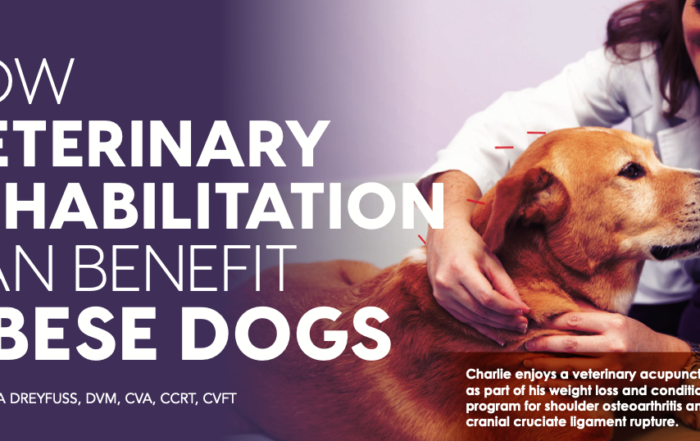 Veterinary Rehabilitation