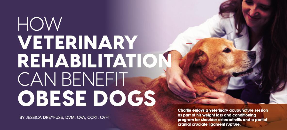 Veterinary Rehabilitation