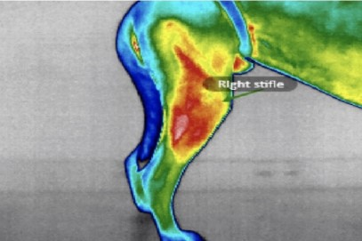 An infrared thermal image of knee damage in a dog