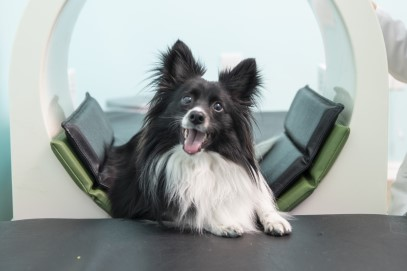 Chaplin utilizes magnetic pain relief therapy to treat his early arthritis of the hips and knees. He also comes in for pulse treatments.